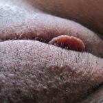 my wife pussy Vulva Close-up