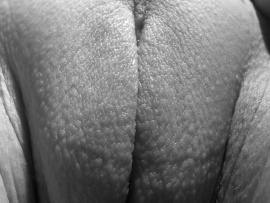 outer-labia-close-up