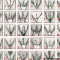 vulva-pussy-types